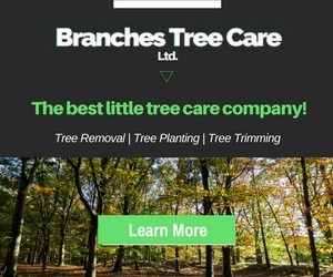 Branches Tree Care Ltd.
