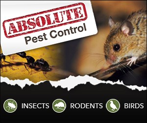 Absolute Pest Control Inc.